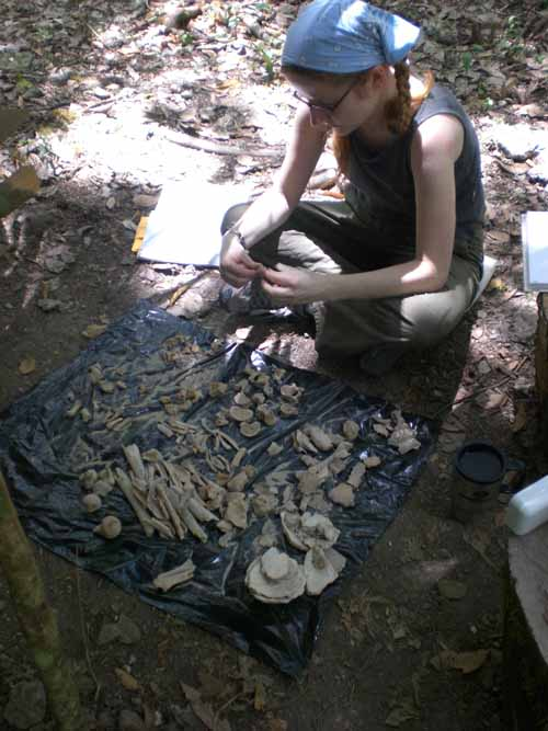 Counting bones2